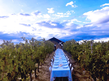 TOUR DIVINI - EVENTS - DINNER IN THE VINEYARD